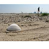 Beach, Mussel, Runner