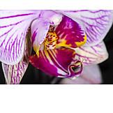Blüte, Makro, Orchidee