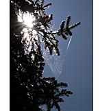 Spider web, Branch