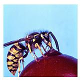 Animal, Wasp, Sucking