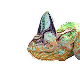 Colors, Animals, Reptiles, Multi Colored, Chameleon