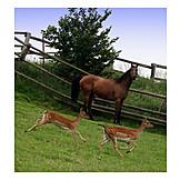Horse, Deer, Paddock