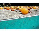 Fruit, Rotting, Mirabelle