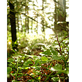 Forest, Glade, Undergrowth, Lighted
