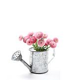 Flower vase, Daisy, Daisy