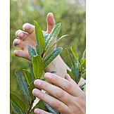 Pflege & Fürsorge, Pflanze, Wachstum