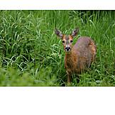 Wildlife, Deer