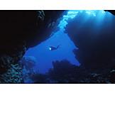 Diver, Diving, Sport diver
