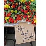 Tulip, Market, Florist
