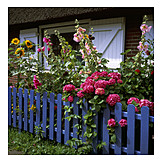 Flower, Garden fence, Flower bed