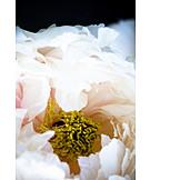 Blüte, Makro, Staubgefäß