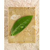 Beauty & cosmetics, Natural cosmetics, Bar of soap, Care product, Piece of soap