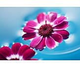Flower, Blossom, Aromatherapy, Flower arrangements