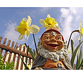 Daffodil, Garden gnome