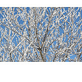 Winter, Rime, Ice crystal, Branches