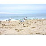 Beach, Baltic sea, Seagull