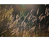 Grasses, Grass family
