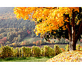 Rhineland, Palatinate, Southern palatinate
