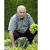 Active seniors, Harvesting, Lettuce
