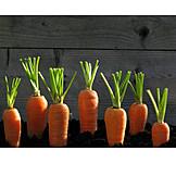Vegetable, Carrot