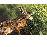 Wildlife, Hare