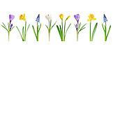 Spring, Spring Flower, Spring Flower