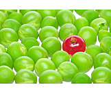 Individuality & Uniqueness, Currant, Pea Family