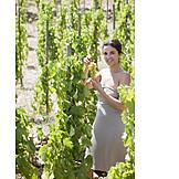 Woman, Harvest, Vineyard, Harvest Time, Winery, Vineyard