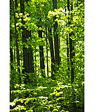 Forest, Deciduous forest