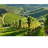Vineyard, Durbach
