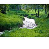 Stream, Creek