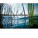 Lake, Reed, Water surface
