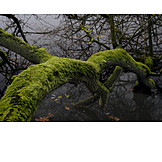 Moss, Tree trunk, Mysterious