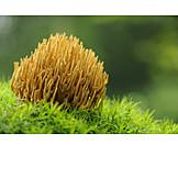 Mushroom, Coral fungus, Coral