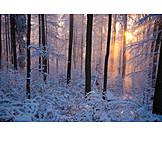 Sun, Forest, Winter landscape