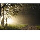 Forest, Sunbeams, Fog