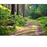 Forest, Trail, Saxon switzerland