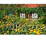 House, Front garden, Overgrown