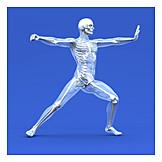 Medizinische Grafik, Gläserner Mensch, Menschlicher Körper