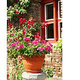 Garden, Flower Pot, Geranium