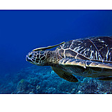Turtle, Sea turtle, Putzsymbiose