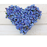 Forget, Me, Not, Heart