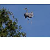 Humor & bizarre, Gray heron, Heron