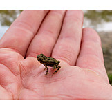 Small, Frog
