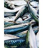 Fish, Mackerel