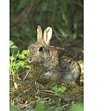 Wildlife, Feeding, Hare