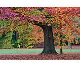 Tree, Autumn, Oak Tree