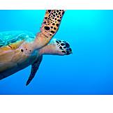 Underwater, Turtle, Sea turtle