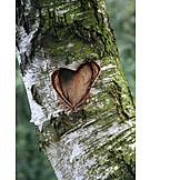 Tree trunk, Heart, Love message