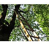 Cherry Tree, Harvest, Ladder